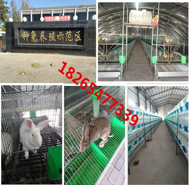 新西兰种兔幼苗几个月可以出栏厂