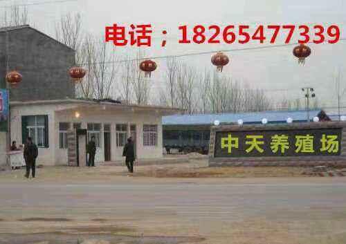 http://www.jiuwei91.com/wenhuayichan/179406.html