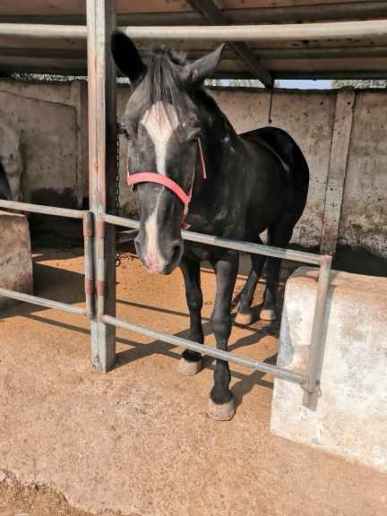 南宁附近有养殖出售羊驼矮马宠物迷你驴的吗